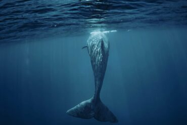 Whale. Photo by Willyambradberry/Dreamstime.